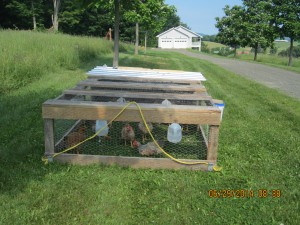 portable chicken pen
