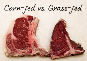 Grain fed vs. grass fed beef